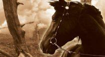 Audiobook Review: War Horse by Michael Morpurgo